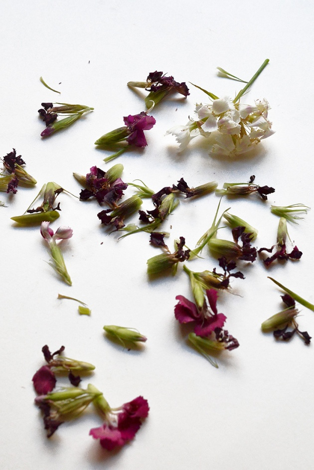 Aged Elegance ~ fresh flower abstraction of clipping in the studio
